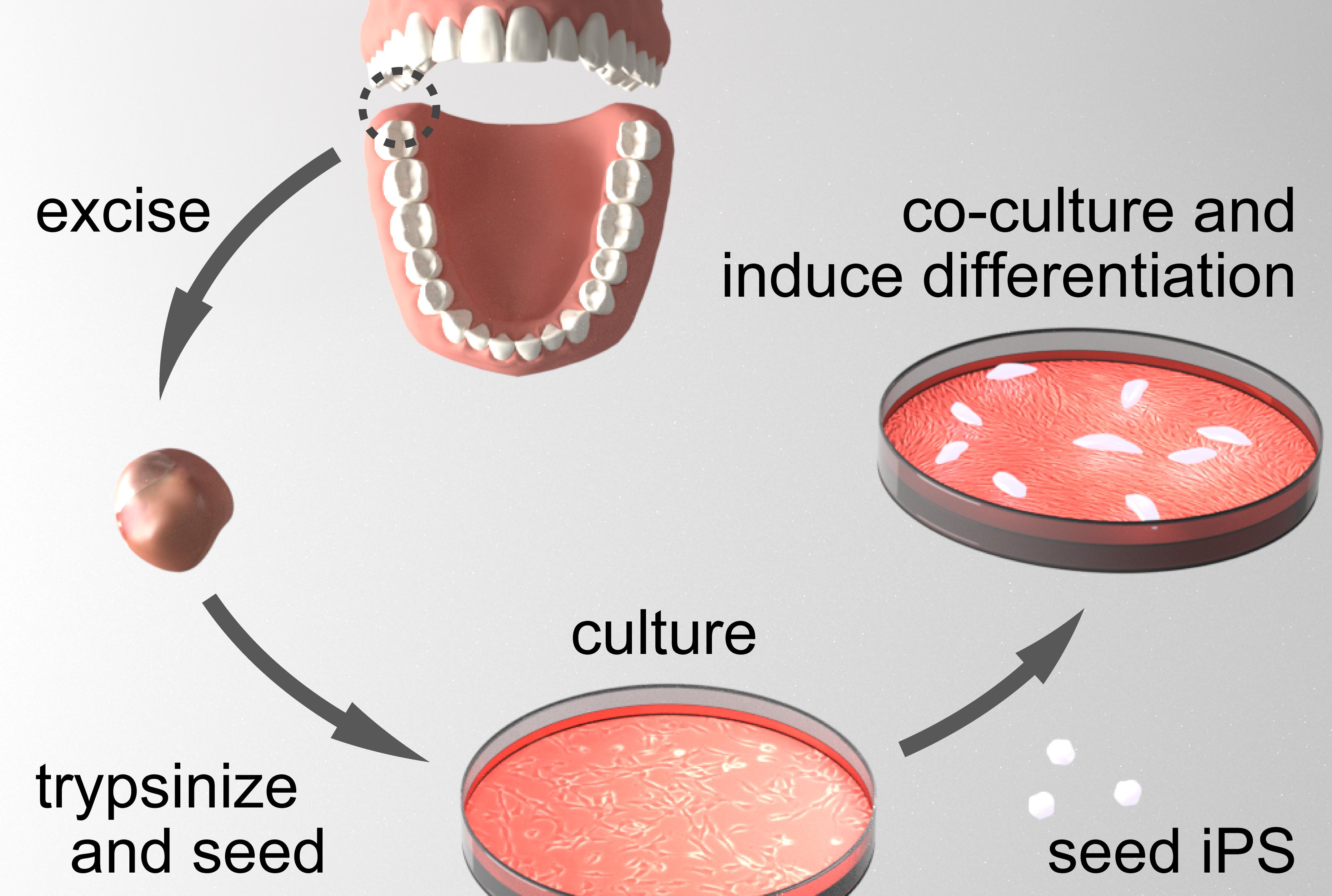 Cardiac regenerative medicine